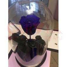 Живая Роза в колбе тёмно-синия