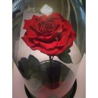 Роза в колбе живая Вип размер