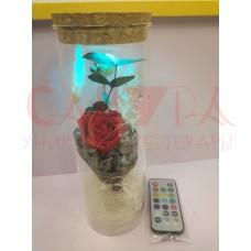 Роза в колбе живая с подсветкой и пультом