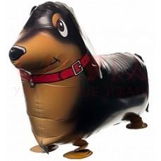 """Шар 28"""" Собака Такса коричневая  с ножками 70см"""