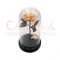 Живая роза в колбе ВИП персиковая