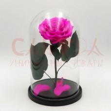 Живая роза в колбе ВИП размер розовая