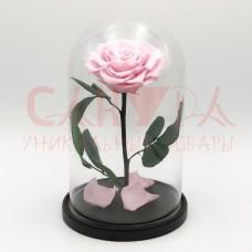 Живая роза в колбе ВИП размер светло-розовая
