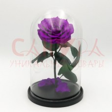 Живая роза в колбе ВИП фиолетовая